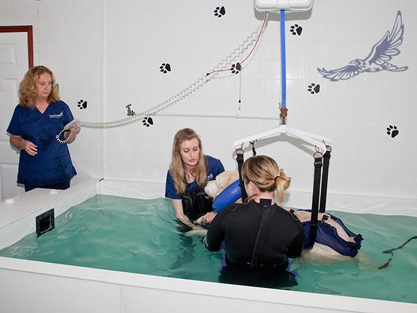 hydrotherapy-hoist